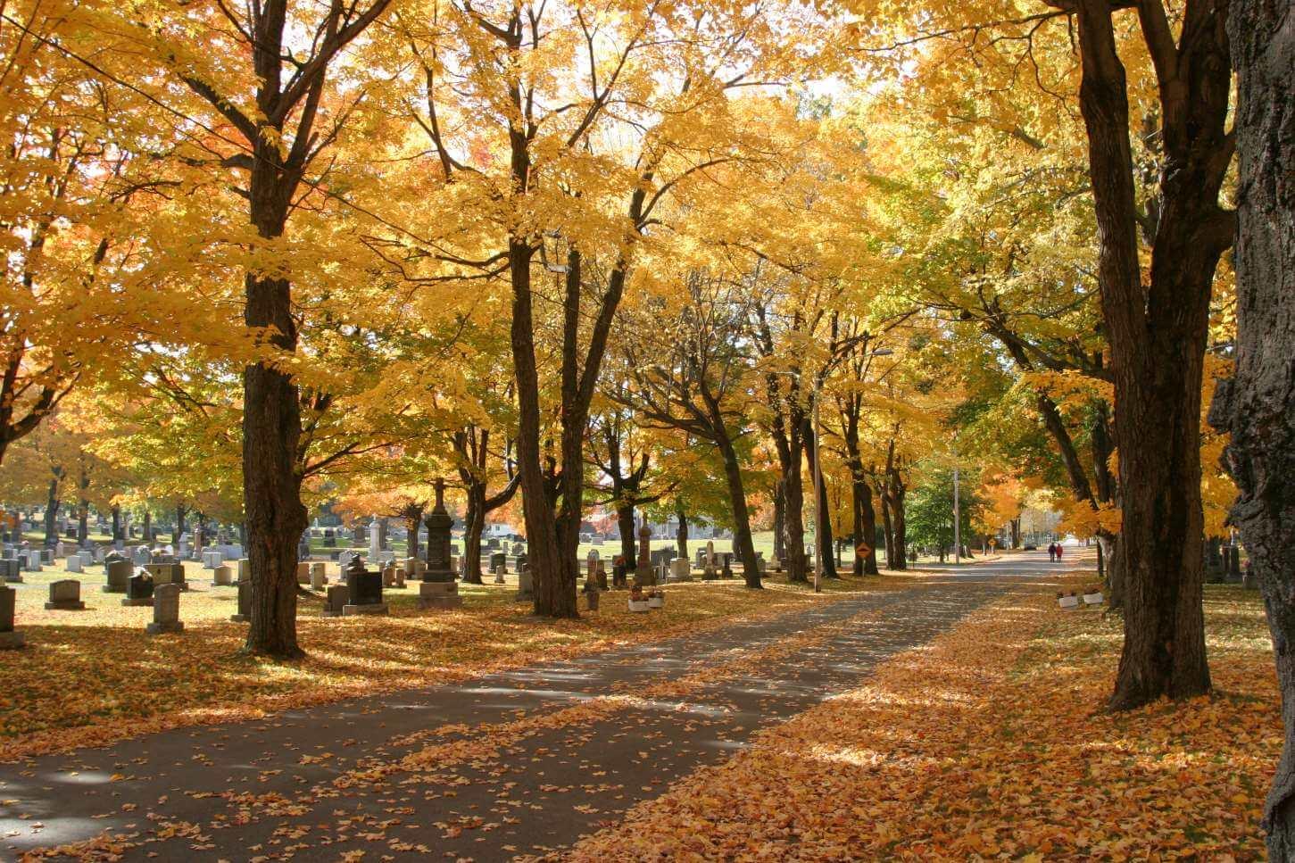 Corporation du cimetière Mont-Marie - Levis-automne